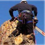 спил, валка и обрезка деревьев промышленными альпинистами, арбористами