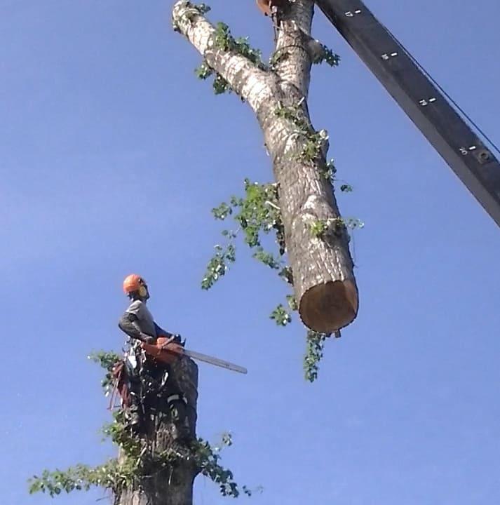 Спил дерева частями с автокраном