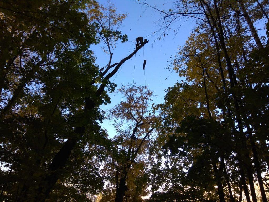 Спил дерева с завешивонием частей