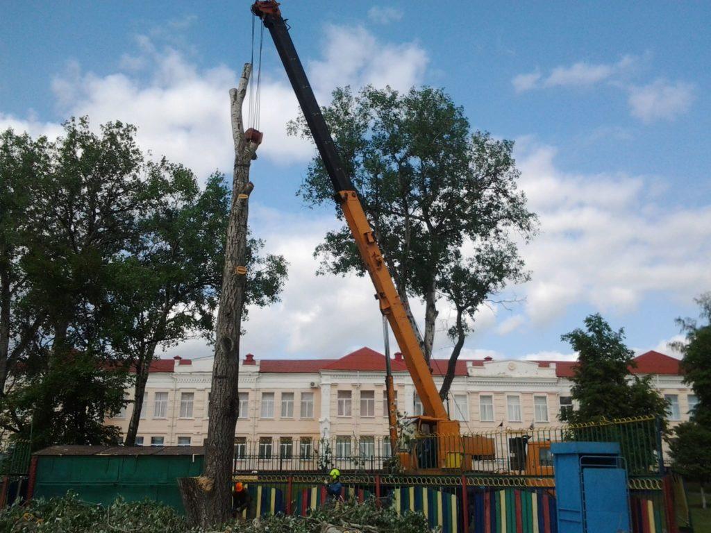 Арборист удаляет дерево с автокраном